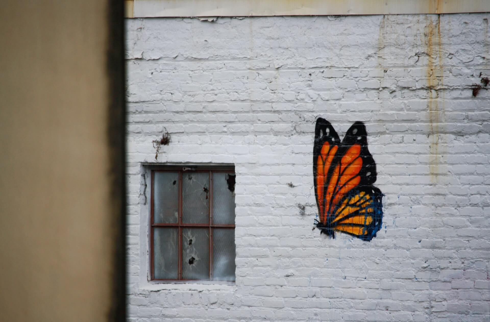 Leadership for times like these featured image of a butterfly